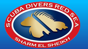 Scuba Divers Red Sea